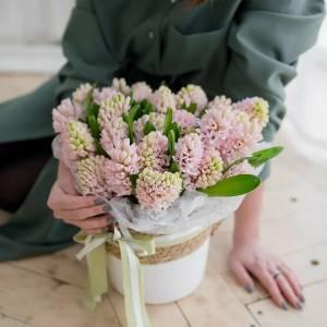 Коробка 25 розовых гиацинтов с оформлением R1088