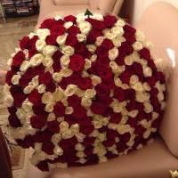 301 роза красная и белая R920
