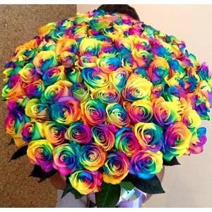 Крупные 101 радужная роза с лентами R813